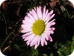 Frühjahrsbilder o9 065